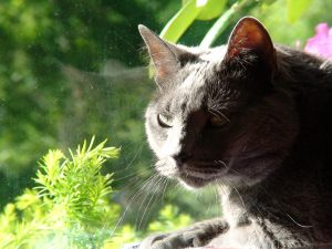 Cat and Kitten Vaccination in Selden, NY | Suffolk